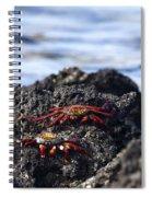 Sally Lightfoot Crabs Spiral Notebook