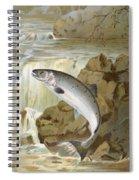 Salmon, C1900 Spiral Notebook