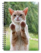 Salute Cat Spiral Notebook