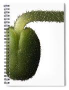 Salvia Polystachya Sprout Spiral Notebook