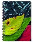Same Variety Spiral Notebook