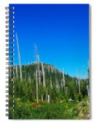 Sand Blasted Trees  Spiral Notebook