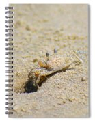 Sand Crab Digging His Hole Spiral Notebook