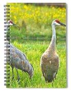 Sandhill Crains 7593 Spiral Notebook