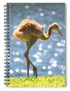 Sandhill Crane Daydreamer Spiral Notebook