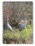 Sandhill Cranes In Colorful Marsh Spiral Notebook