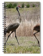 Sandhill Parade Spiral Notebook