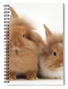 Sandy Lionhead Rabbits Spiral Notebook