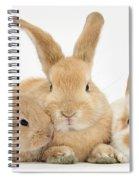 Sandy Rabbit And Babies Spiral Notebook
