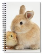 Sandy Rabbit And Yellow Bantam Chick Spiral Notebook