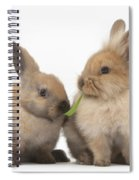 Sandy Rabbits Sharing Grass Spiral Notebook