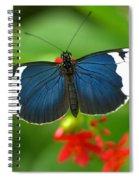 Sara Longwing Spiral Notebook