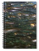 Sardines Anyone Spiral Notebook