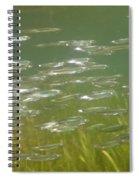 Sardines Spiral Notebook