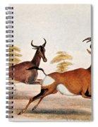 Sassaby And Hartebeest, Spiral Notebook