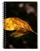 Sassafras Leaf Glowing Spiral Notebook