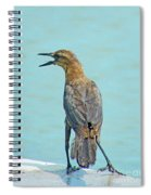 Say What Spiral Notebook