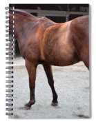 Sc-044-12 Spiral Notebook