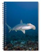 Scalloped Hammerhead Shark Spiral Notebook