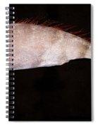 Scalloped Ribbonfish Spiral Notebook