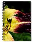Scarlet Pimpernel Spiral Notebook