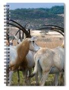Scimitar-horned Oryx Spiral Notebook