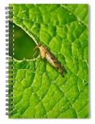 Scorpion Fly Nosing Around Spiral Notebook