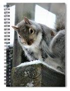 Scratching An Itch Spiral Notebook