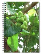 Sea Grape Sgwc Spiral Notebook