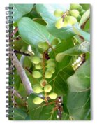 Sea Grapes Spiral Notebook