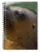 Sea Lion Up Close. Spiral Notebook