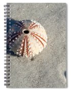 Sea Urchin And Shell Spiral Notebook