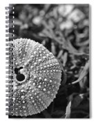 Sea Urchin On Seaweed Spiral Notebook