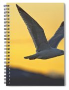 Seagull Flying At Dusk With Sunset Spiral Notebook