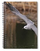 Seagull Seagull On The Move Spiral Notebook
