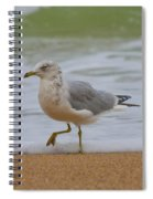 Seagull Stomp Spiral Notebook