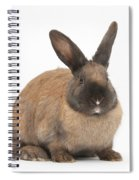 Seal-point Rabbit Spiral Notebook