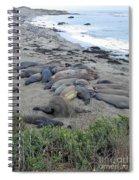 Seal Spa. Sand Bath Spiral Notebook