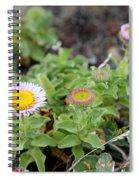 Seaside Fleabane Flowers Spiral Notebook