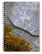 Seaweed And Boulder Spiral Notebook