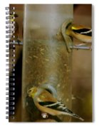 Seed Eating Song Birds Spiral Notebook