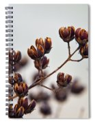 Seed Pods 2 Spiral Notebook