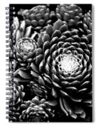 Sempervivum Spiral Notebook