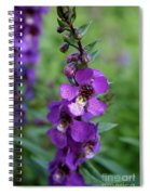 Serenita Purple Spiral Notebook