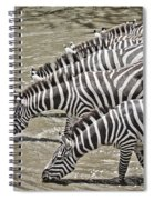 Several Thirsty Zebra Spiral Notebook