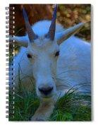 Shady Goat Spiral Notebook