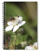 Sharing A Bud Spiral Notebook