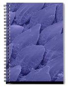 Shark Skin, Sem Spiral Notebook