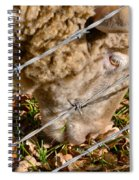 Sheep 1 Spiral Notebook