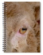 Sheep Close Up Spiral Notebook